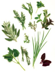 contVis_herbs